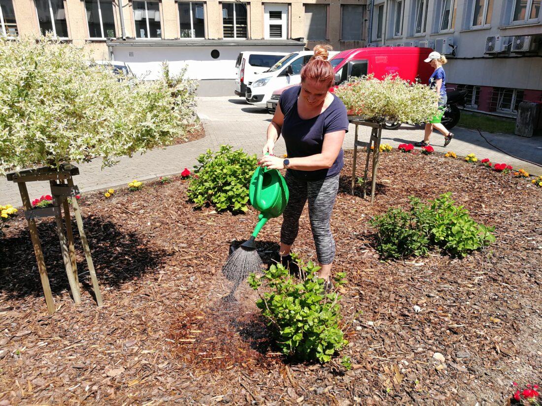 Zdjęcie: W ostatnim czasie w ogrodzie społecznym, przy ul. Grabowo pracownicy MOPS zadbali o wiosenno-letnie porządki.