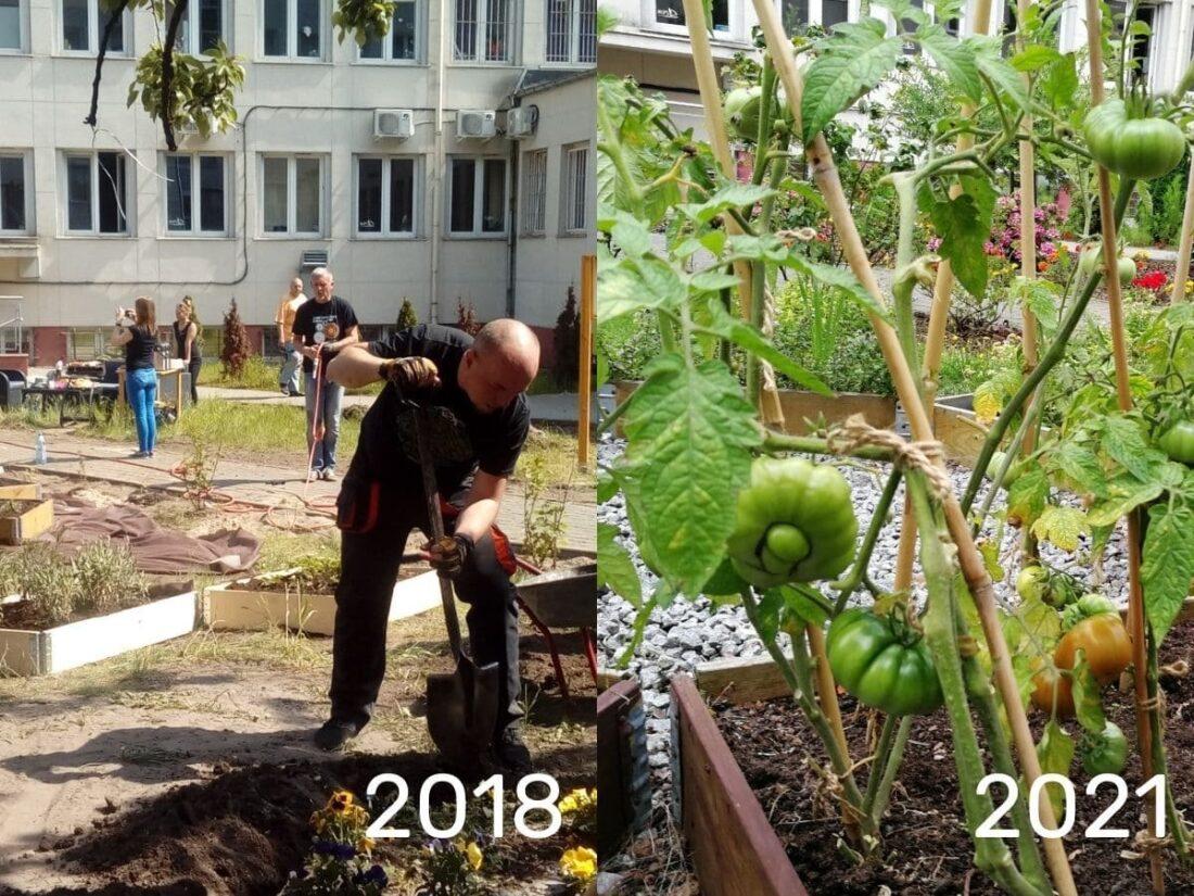 Zdjęcie: Ogrody społeczne w Gdyni powstały kilka lat temu i z roku na rok pięknieją. Na zdjęciu ogród na Grabówku
